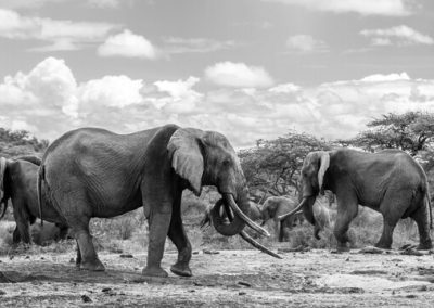 Tusk Trust – Conservation Awards Nominee Profiles 2014